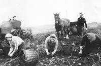Woensdag 27 november 20.00 uur: OKB; Hoe de aardappel (weer) in Salland kwam